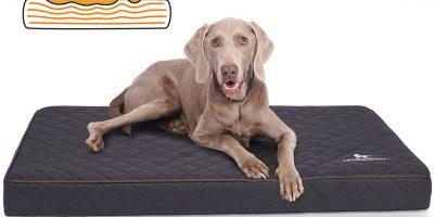 comment bien choisir un matelas orthopedique pour chien
